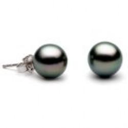 Black Tahitian Pearl Stud Earrings 8-9 mm AA+ or AAA