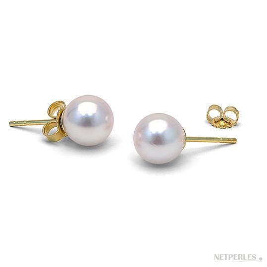 14k Gold White Akoya Pearl Stud Earrings 7-7.5 mm AA+ or AAA