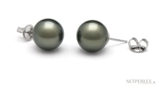 Black Tahitian Pearl Stud Earrings 12-13 mm AA+ or AAA