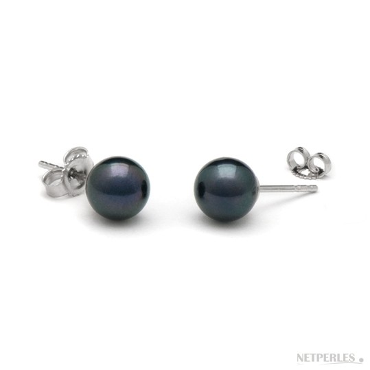 Black Akoya Pearl Stud Earrings 6-6.5 mm AA+ or AAA